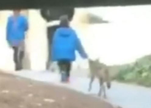 Coyote Bites 5-Year-Old Boy at California College Campus